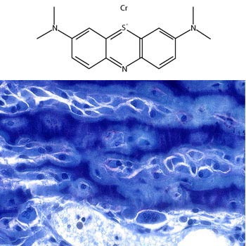 Loeffler's Alkaline Methylene Blue (Methylene Blue Counterstain)