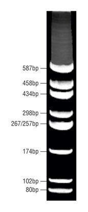 DNA Micromarker Ladder (80bp - 587bp)