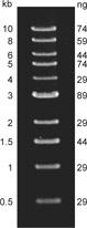 DNA Marker Ladder (500 bp to10 kb)