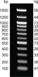 DNA Marker Ladder (100 bp - 3kb)