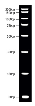 DNA Molecular Weight Marker with dye (50 bp to 2000 bp)