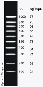 DNA Ladder (100bp-1kb) [100 Loads]