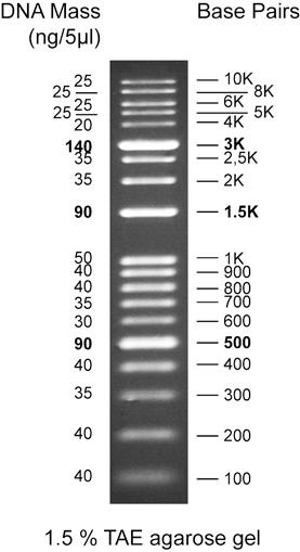 DNA Marker (100bp-1kb) [100 Loads]
