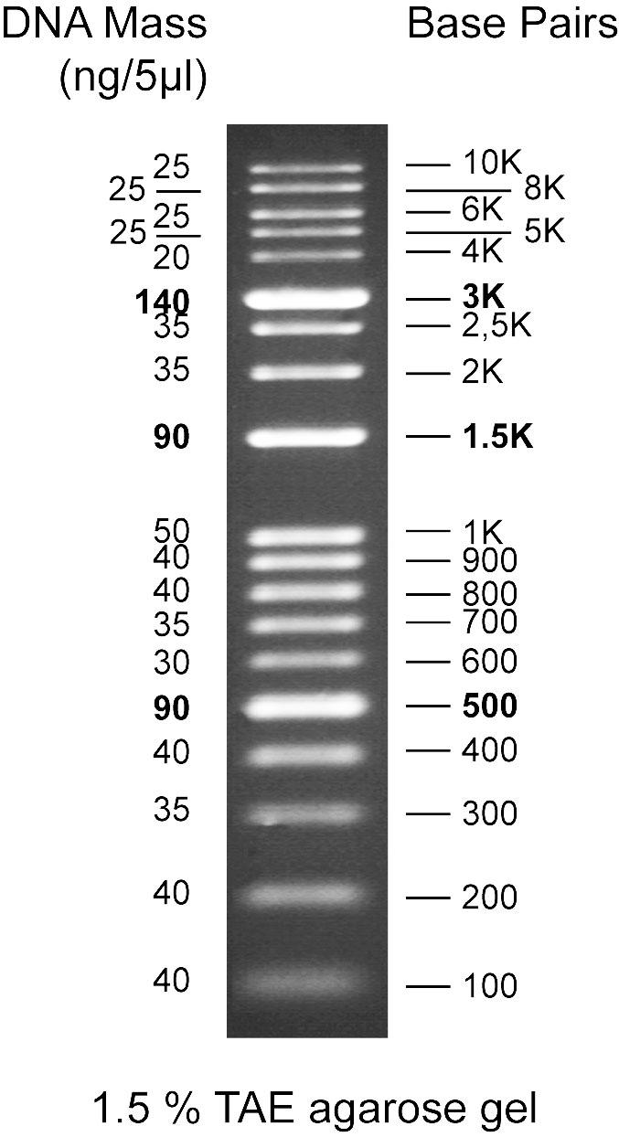 DNA Marker (100bp to 10 kb)