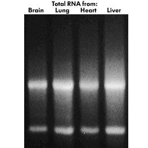 Total RNA Isolation Kit [1 Kit]