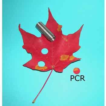 Leaf PCR Kit