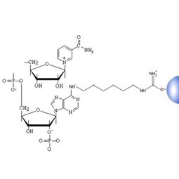 NADP Separopore® 4B-CL