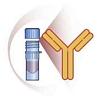 Anti-Phosphoserine Antibody (Rabbit Polyclonal IgG)