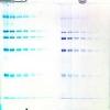 Blue-Bandit, protein stain