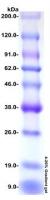 Prestained Protein Marker, Broad Range (9.0-200 kDa)