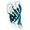 Avidin protein