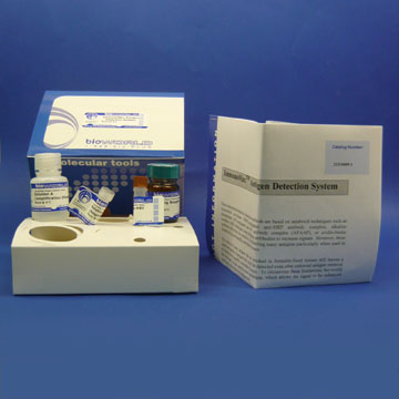 Protein Biotinylation Kit