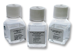 Antibiotic-Antimycotic Solution (100X)