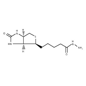 Biotin Hydrazide
