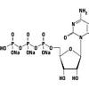 CTP (Cytidine-5`-triphosphate) Disodium salt